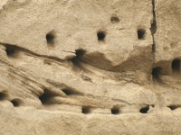 gniazda jaskólki brzegówki